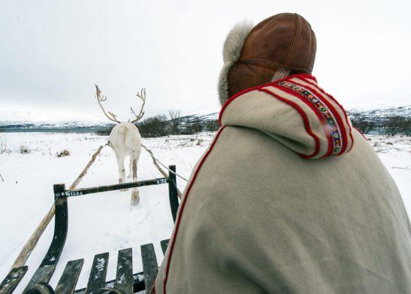 Schlittentour mit einem weißen Rentier im Schnee
