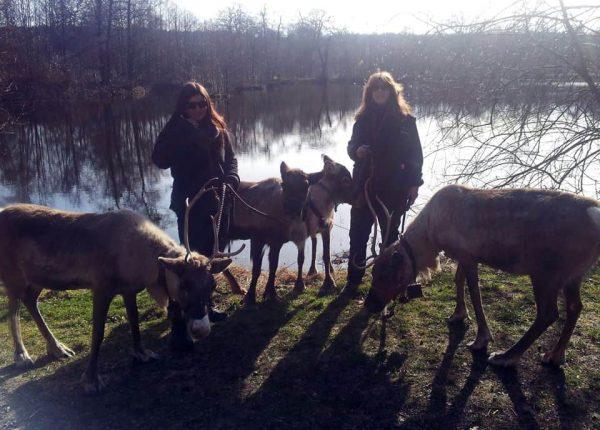 Rentiere im Tierpark Sababurg hautnah erleben